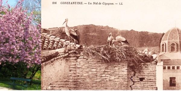 UneàlaUne-Constantine-La Cité-1G2