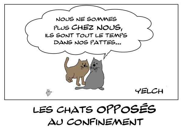 31-mars-2020-les-chats-opposes-au-confinement
